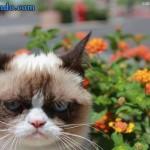 grumpy cat foto filme